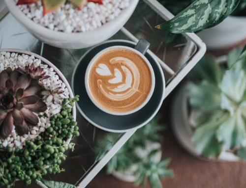¿Qué es el café ecológico y qué beneficios tiene?